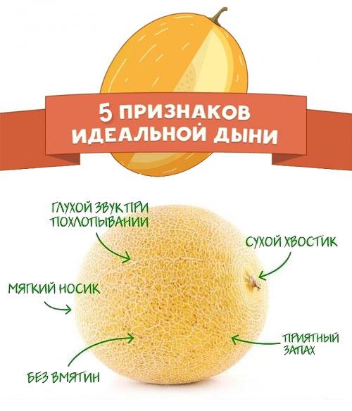 Дыня это фрукт, ягода или овощ – полезные свойства и калорийность плода