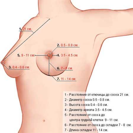 увеличение груди за неделю
