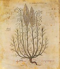 Это растение имеет лекарственную