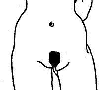 znakomstva-v-zelenograde-intim